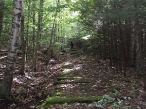 Kaaterskill Rail Trail in the forest